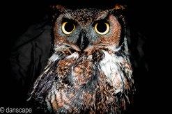 owl (8 of 9)